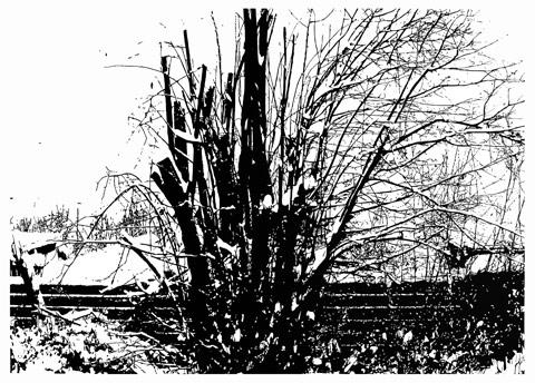 Strauch, 2010, 95 x 135 cm, Linoldruck / Linocut
